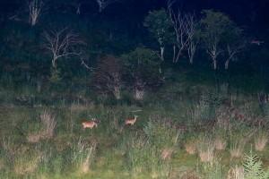 鹿の目ウォッチング4