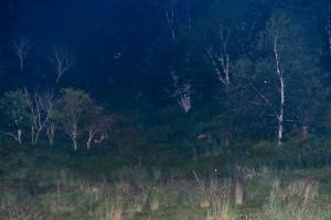 鹿の目ウォッチング6