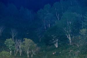 鹿の目ウォッチング5