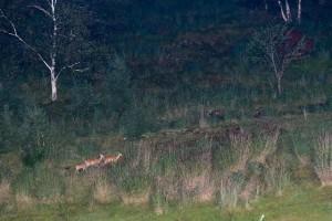 鹿の目ウォッチング3