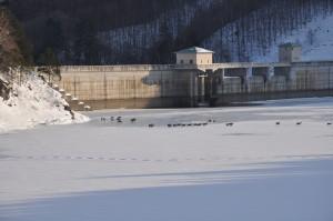 凍った湖の上を歩く鹿の群れ