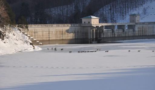 ヒャーっ寒そう!!乙女湖の厳冬期
