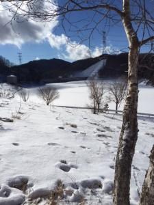 厳冬期の乙女湖